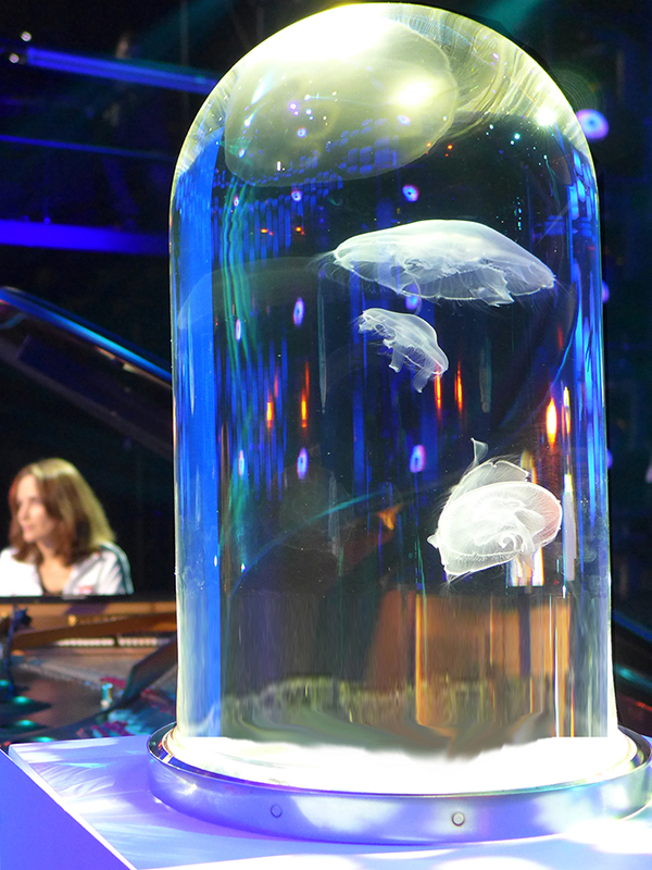 jellyfish aquarium - jellyfish tank